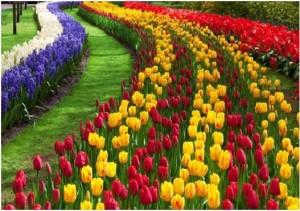 Jardines colores