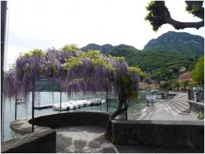 jardin viol